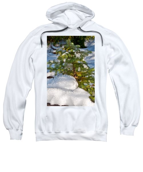 Young Winter Pine Sweatshirt