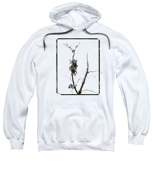 Branch Of Dried Out Flowers. Sweatshirt