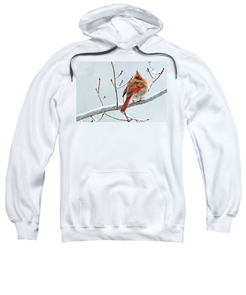 Cardinal I The Snow  Sweatshirt