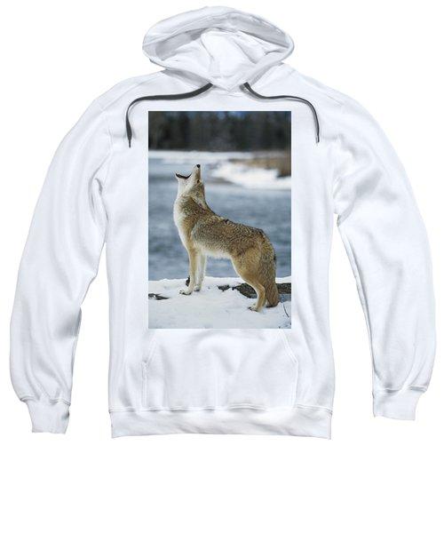 Coyote Howling On Snowy Riverbank Sweatshirt