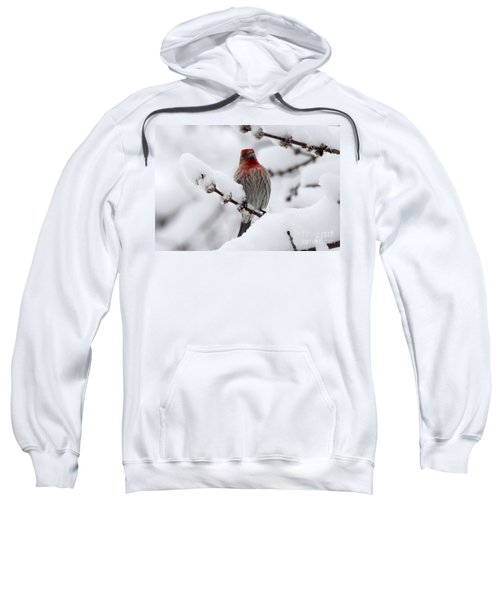 House Finch Sweatshirt