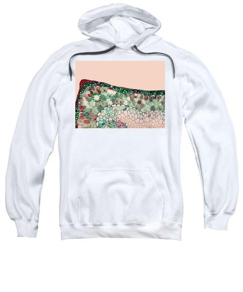 Pine Needle Light Micrograph Sweatshirt