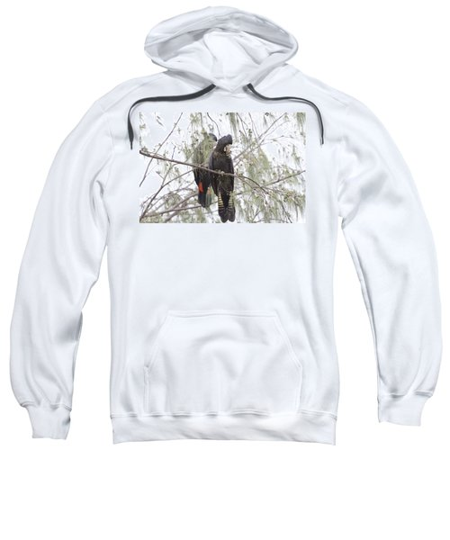 Red Tailed Black Cockatoos Sweatshirt by Douglas Barnard