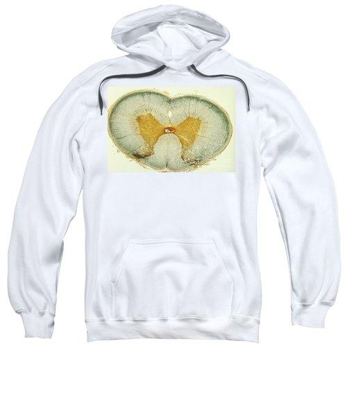 Spinal Cord Sweatshirt