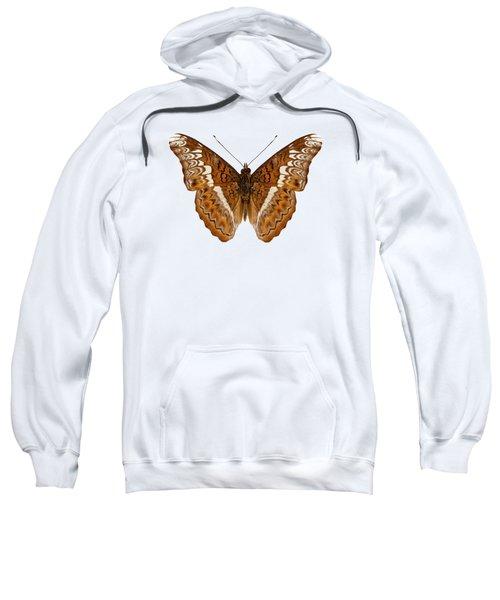 Admiral Limenites Butterfly Sweatshirt
