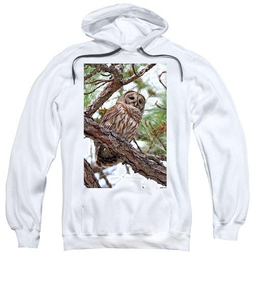 Barred Owl In Pine Tree Sweatshirt