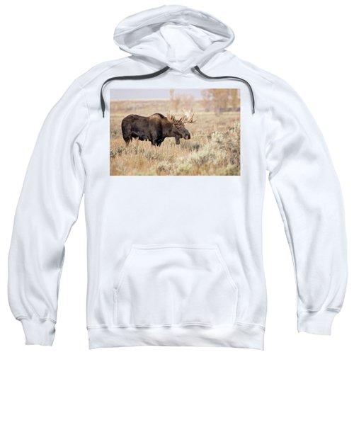 Bull Moose  Sweatshirt