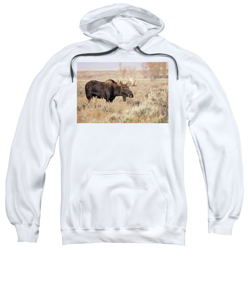 Bull Moose  Sweatshirt