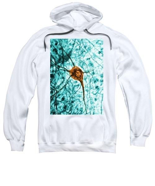 Neuron, Tem Sweatshirt