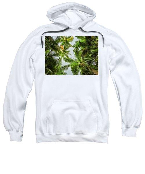 Palm Trees And Blue Sky Sweatshirt