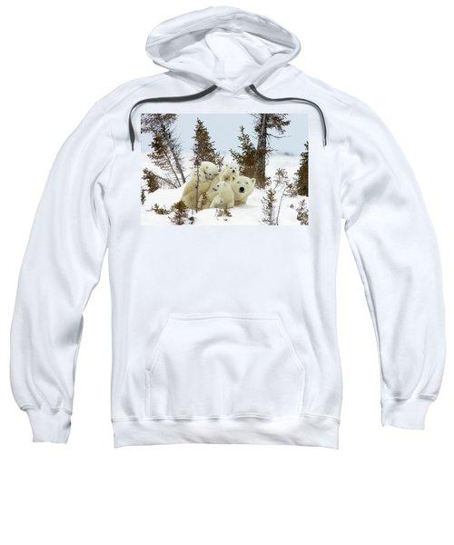 Polar Bear Ursus Maritimus Trio Sweatshirt
