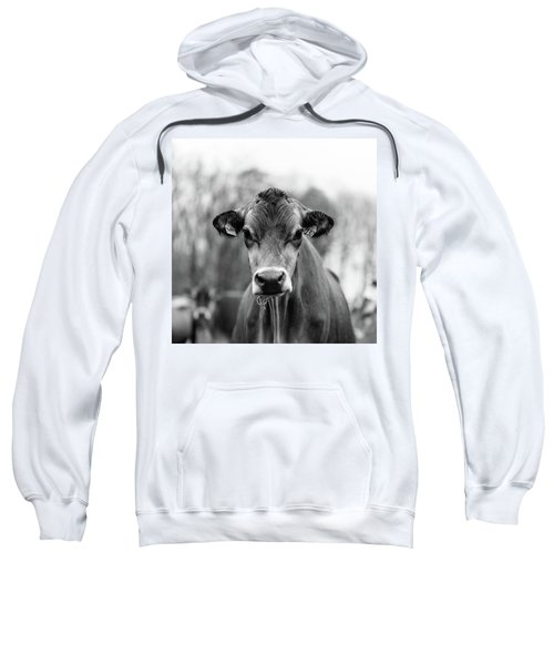 Portrait Of A Dairy Cow In The Rain Stowe Vermont Sweatshirt