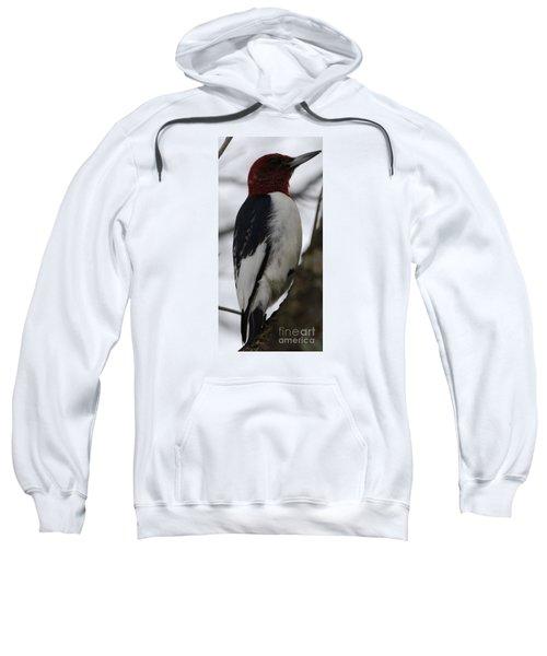 Red-headed Woodpecker Sweatshirt
