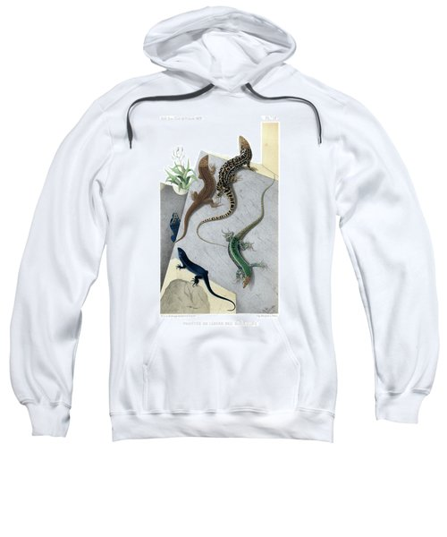 Sweatshirt featuring the drawing Varieties Of Wall Lizard by Jacques von Bedriaga