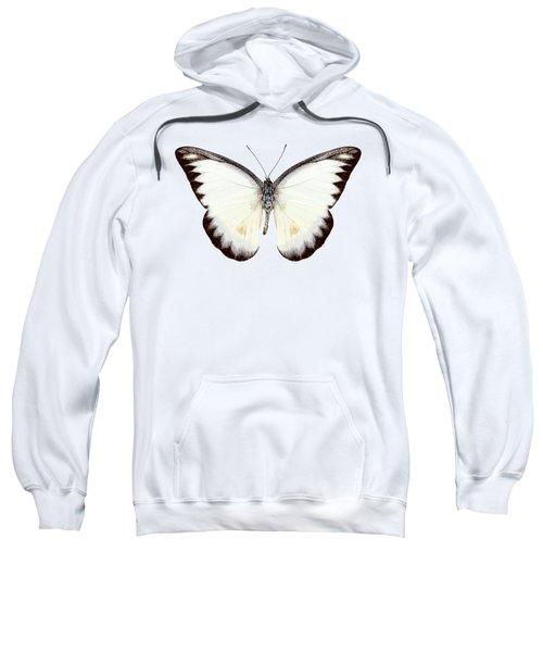 White Butterfly Species Appias Lyncida Sweatshirt