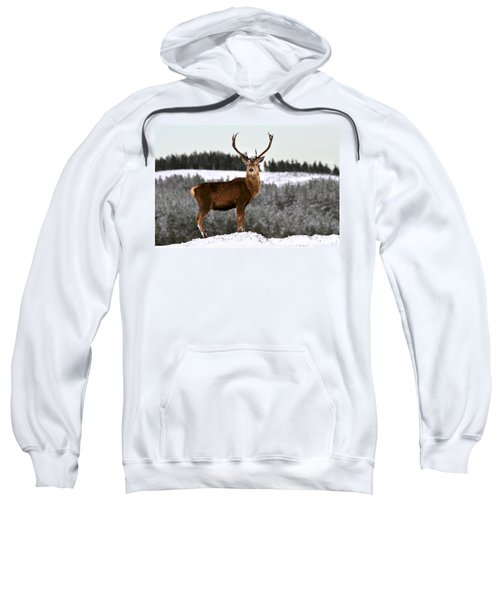 Red Deer Stag Sweatshirt