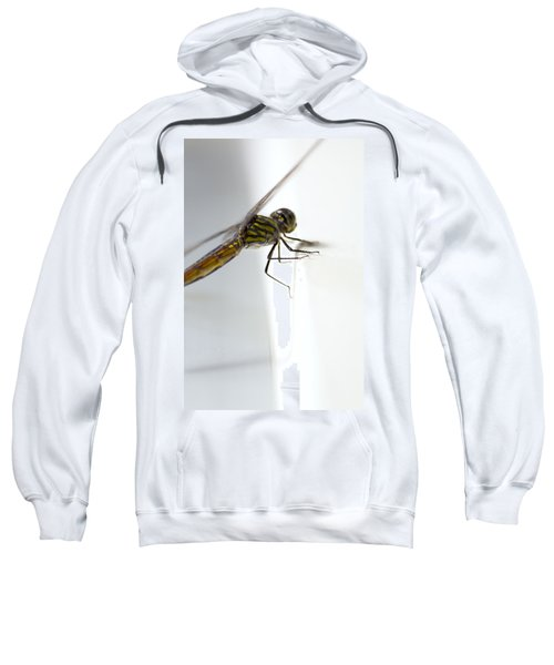 Close Up Shoot Of A Anisoptera Dragonfly Sweatshirt