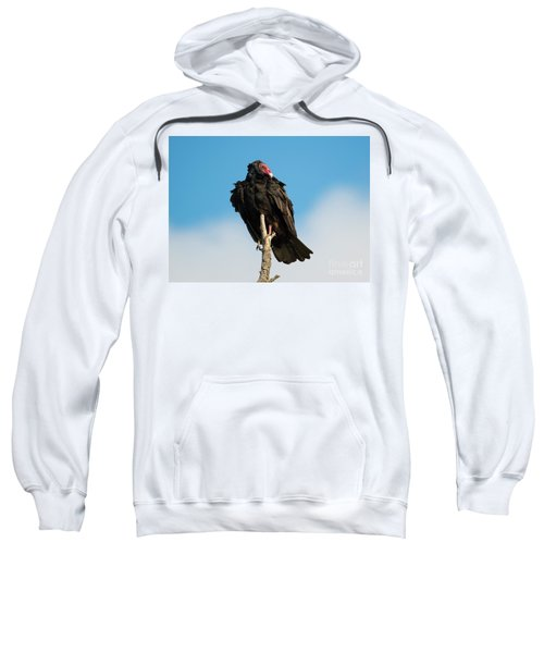Looking For A Meal Sweatshirt
