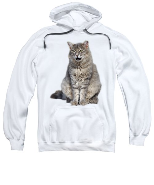 Sitting Cat Sweatshirt