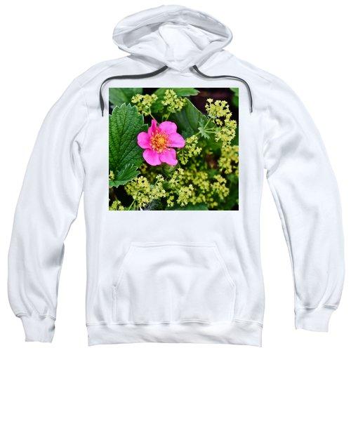 2015 Summer's Eve At The Garden Lipstick Strawberry Sweatshirt