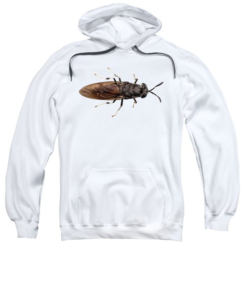 black soldier fly species Hermetia illucens Sweatshirt