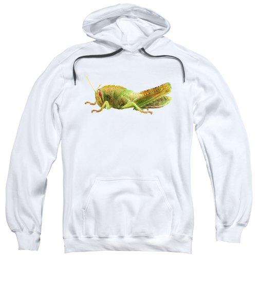 Nymph Of Egyptian Locust Species Anacridium Aegyptium Sweatshirt