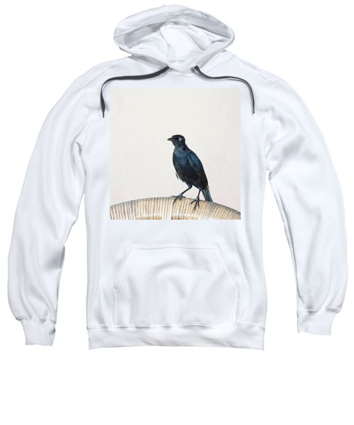 A Carib Grackle (quiscalus Lugubris) On Sweatshirt by John Edwards