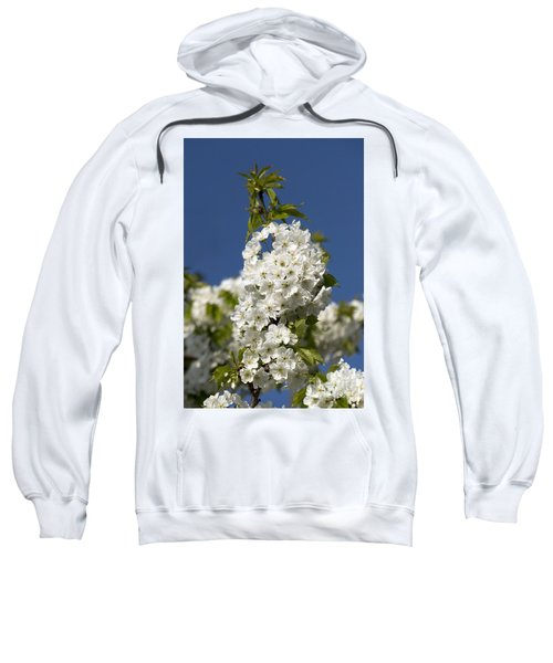 A Cluster Of Cherry Flowers Blossoming In The Springtime Sweatshirt