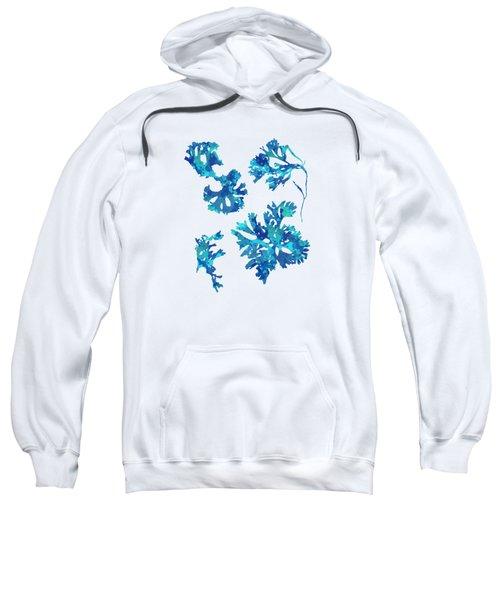Sweatshirt featuring the mixed media Abstract Seaweed Art Rhodomenia Laciniata by Christina Rollo