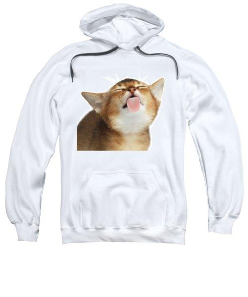 Abyssinian Kitten Licking Screen  Sweatshirt