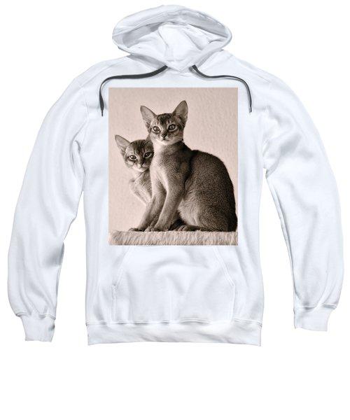Abyssinian Kittens Sweatshirt