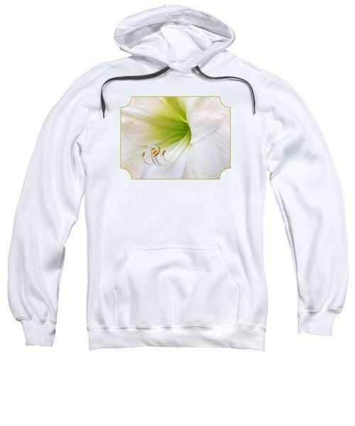 Alluring Amaryllis Sweatshirt by Gill Billington