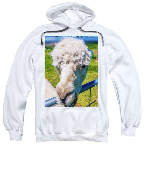 Alpaca Yeah Sweatshirt