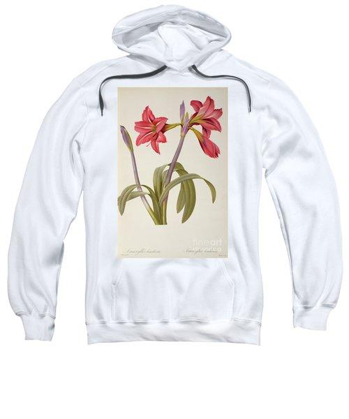 Amaryllis Brasiliensis Sweatshirt