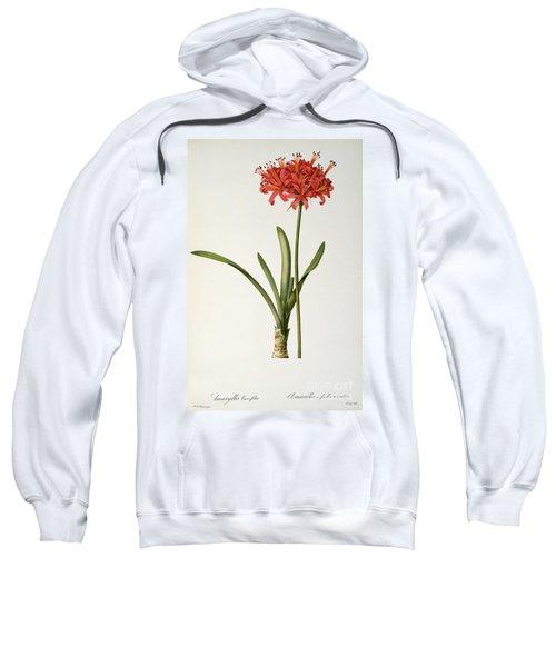 Amaryllis Curvifolia Sweatshirt