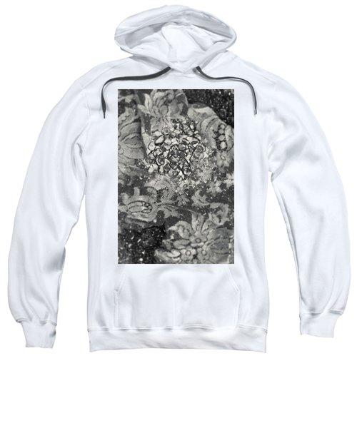 Amber #8647 Sweatshirt