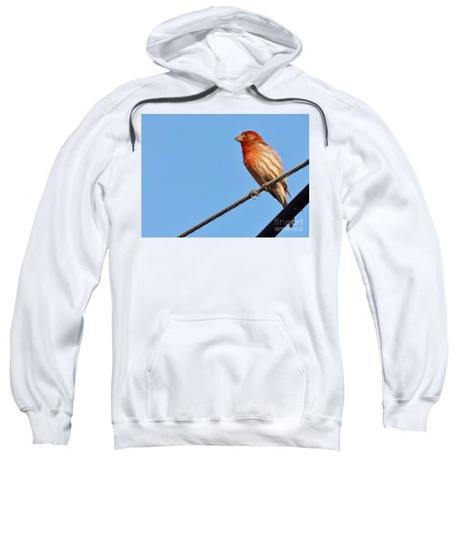 American Crossbill On Wire     Spring   Indiana   Sweatshirt by Rory Cubel