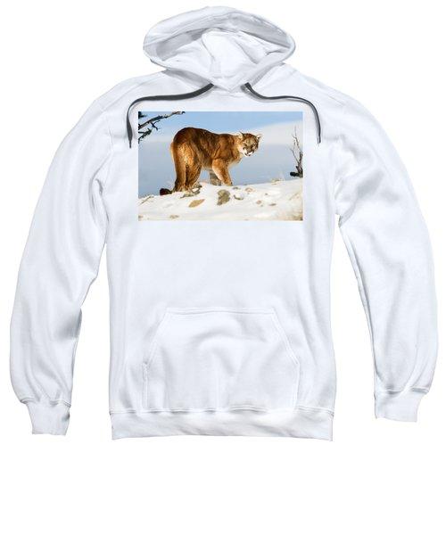 Angry Mountain Lion Sweatshirt