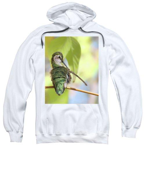 Anna's Hummingbird - Preening Sweatshirt