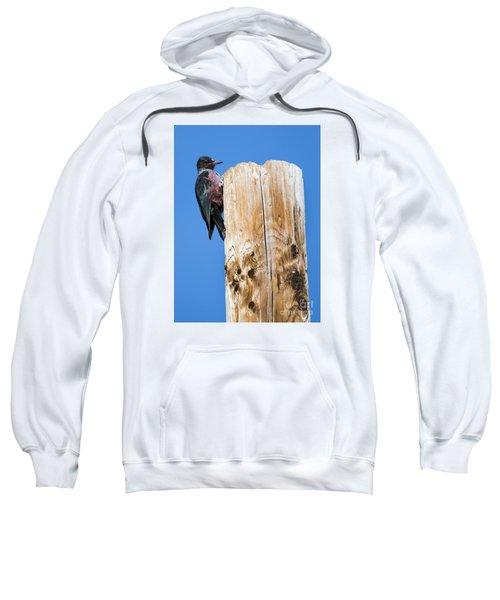 Any Tree Will Do Sweatshirt