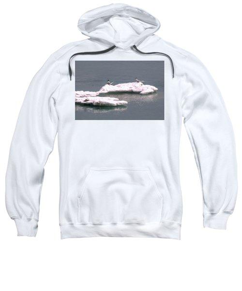 Arctic Terns On A Bergy Bit Sweatshirt