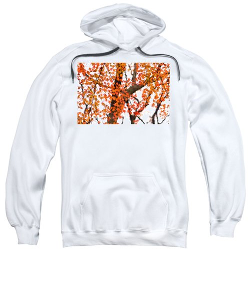 Autumn Red Leaves On A Tree   Sweatshirt