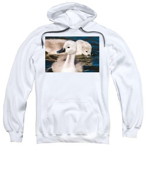 Baby Swan Close Up Sweatshirt