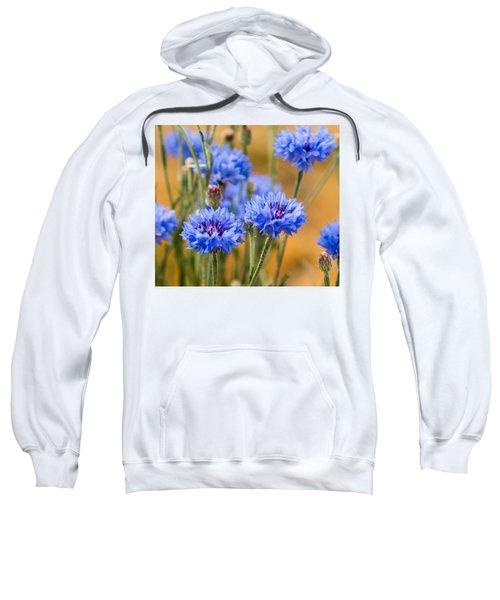 Bachelor Buttons In Blue Sweatshirt