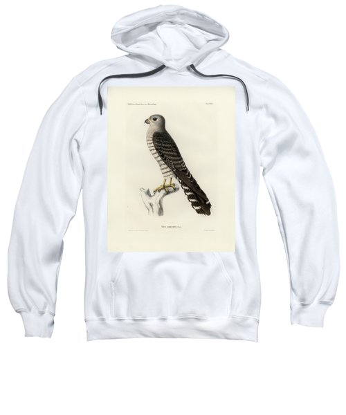 Sweatshirt featuring the drawing Banded Kestrel by J D L Franz Wagner