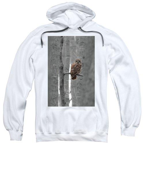 Barred Owl In Winter Woods #1 Sweatshirt