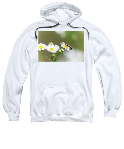 Beetle Daisy Sweatshirt