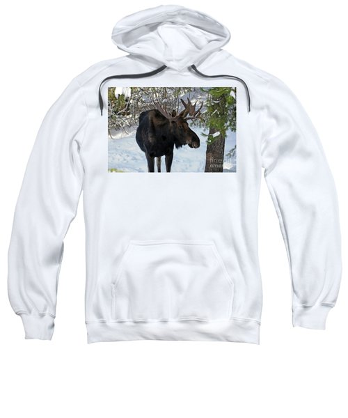 Big Moose Sweatshirt