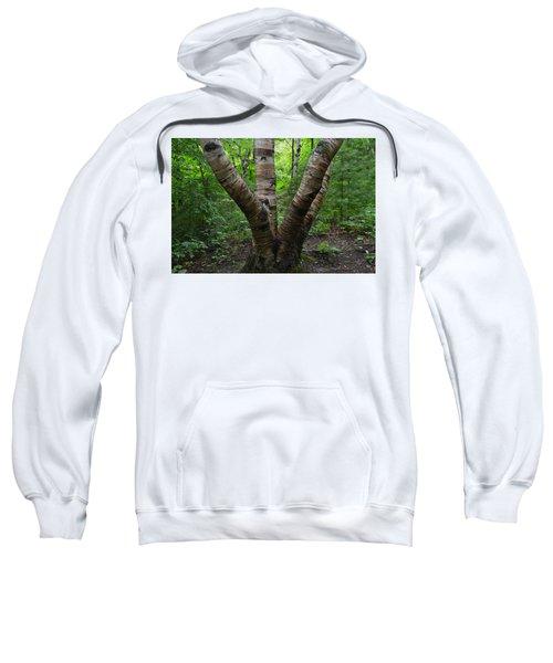 Birch Bark Tree Trunks Sweatshirt