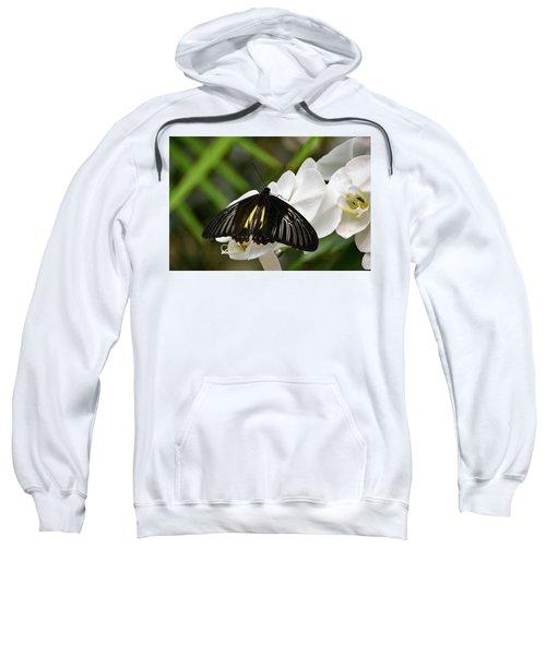 Black Butterfly Sweatshirt